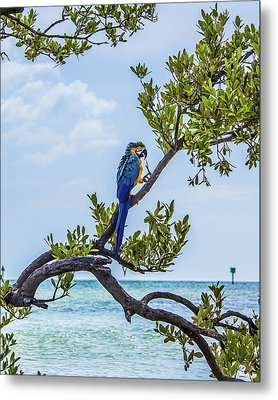 Metal Print featuring the photograph Parrot Above The Aqua Sea by Paula Porterfield-Izzo