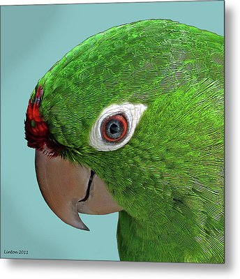 Parrot Portrait Metal Print by Larry Linton