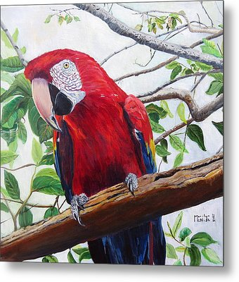 Parrot Portrait Metal Print by Marilyn  McNish
