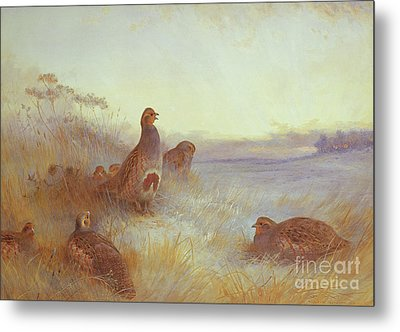 Partridges In Early Morning Metal Print by Archibald Thorburn