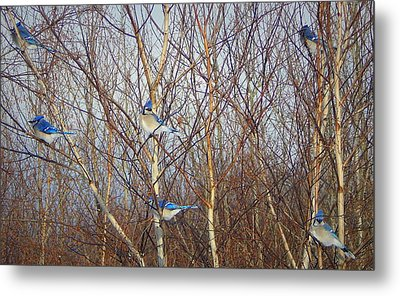 Party Of Six Metal Print by Karen Cook