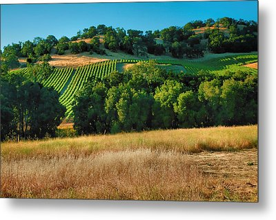 Paso Robles Vineyard Metal Print by Steven Ainsworth