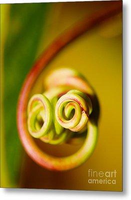 Passiflora Closeup Metal Print