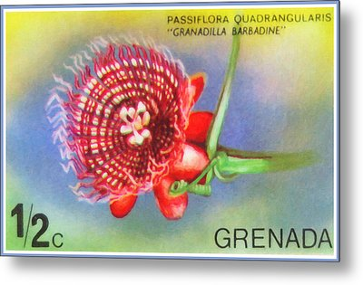 Passiflora Quadrangularis Metal Print by Lanjee Chee