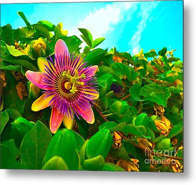 Passiflora Metal Print by Wonju H