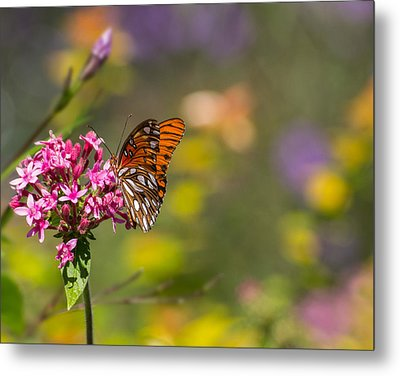 Metal Print featuring the photograph Passion Butterfly  by Julie Andel