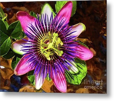 Passion Flower Metal Print by Mariola Bitner