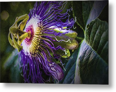 Passion Flower Profile Metal Print by Barry Jones