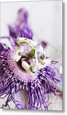 Metal Print featuring the photograph Passion Flower by Stephanie Frey