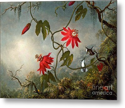 Passion Flowers And Hummingbirds 1870 Metal Print by Padre Art