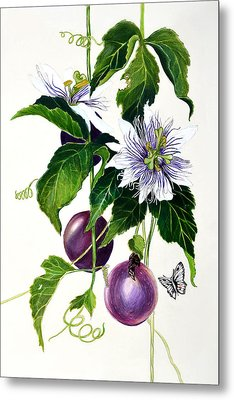 Passion Fruit Metal Print by Lorraine Romaior