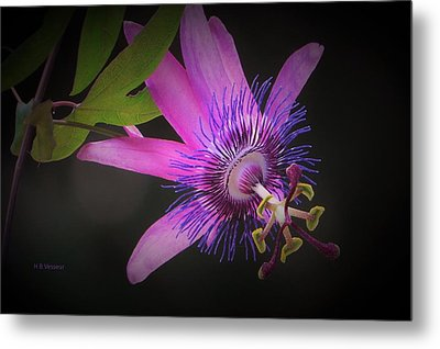 Passionate About You Metal Print by B Vesseur