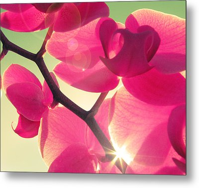 Passionato Metal Print by Amy Tyler