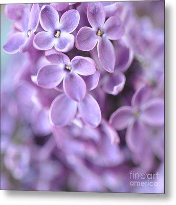 Pastel Lilacs Metal Print