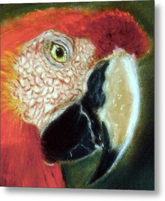 Metal Print featuring the pastel Pastel Of Red On The Head  by Antonia Citrino