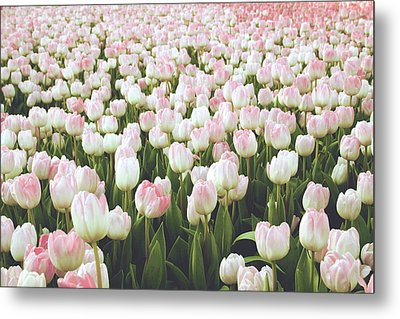 Metal Print featuring the mixed media Pastel Pink Tulips- Art By Linda Woods by Linda Woods