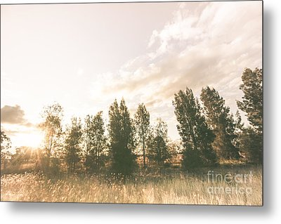 Pastel Sunset Forest Metal Print
