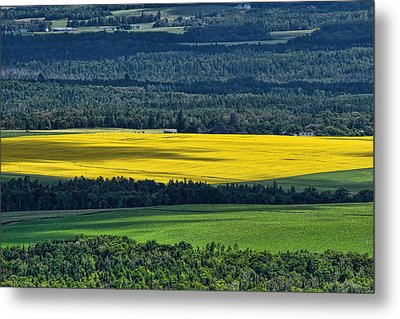 Metal Print featuring the photograph Patch Of Yellow by Gary Smith