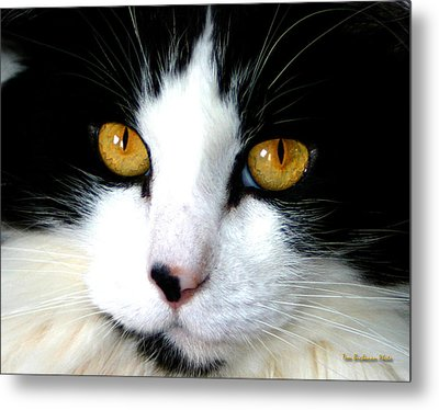 Patches Metal Print