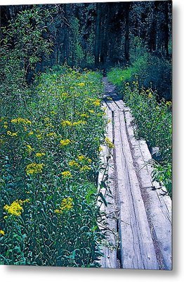 Path 4 Metal Print by Pamela Cooper