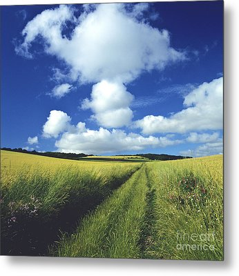 Path In A Countryside Metal Print by Bernard Jaubert