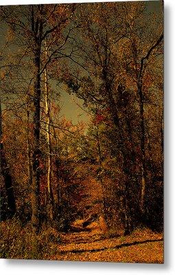 Path Into The Woods Metal Print by Nina Fosdick