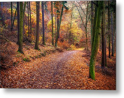 Path Through The Colorful  Autumn Metal Print by Jenny Rainbow