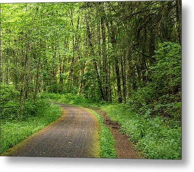 Metal Print featuring the photograph Path Through The Woods by Jean Noren