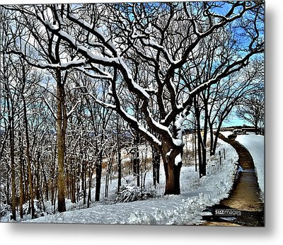 Path To The Lookout Metal Print