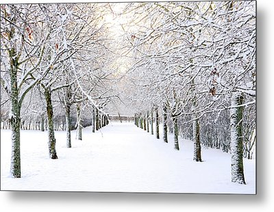 Pathway In Snow Metal Print