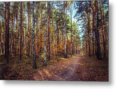 Pathway In The Autumn Forest Metal Print