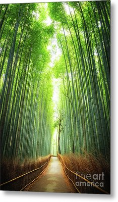 Pathway Through The Bamboo Grove Kyoto Metal Print by Jane Rix