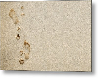 Paw And Footprint 1 Metal Print by Brandon Tabiolo - Printscapes