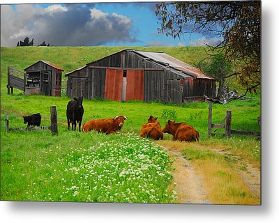 Peaceful Cows Metal Print by Harry Spitz