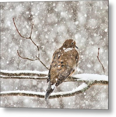 Metal Print featuring the photograph Peaceful by Debbie Stahre