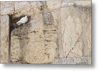 Metal Print featuring the photograph Peaceful Dove by Julie Alison