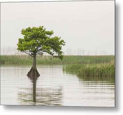 Metal Print featuring the photograph Peaceful Feeling by Julie Andel