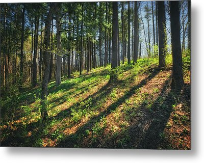 Peaceful Forest 4 - Spring At Retzer Nature Center Metal Print by Jennifer Rondinelli Reilly - Fine Art Photography