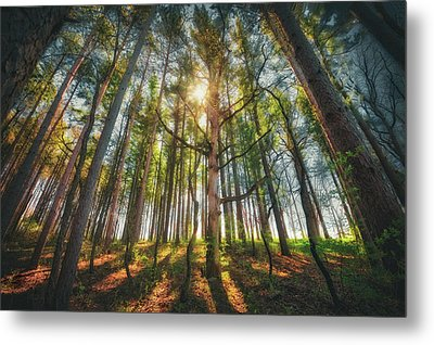Peaceful Forest 5 - Spring At Retzer Nature Center Metal Print by Jennifer Rondinelli Reilly - Fine Art Photography