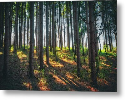 Peaceful Forest - Spring At Retzer Nature Center Metal Print by Jennifer Rondinelli Reilly - Fine Art Photography