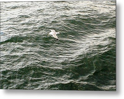 Metal Print featuring the photograph Peaceful Gliding At Sea by Piety Dsilva