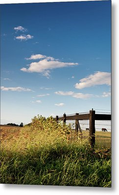 Metal Print featuring the photograph Peaceful Grazing by David Sutton