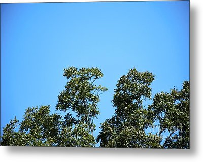 Metal Print featuring the photograph Peaceful Moment by Ray Shrewsberry