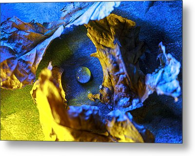 Peaceful Nest  Metal Print