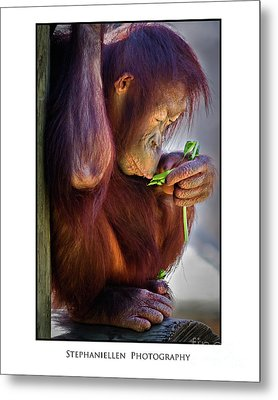 Peaceful Orangutan Metal Print by Stephanie Hayes