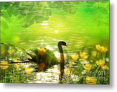 Peaceful Swan In Lake With Flowers Metal Print