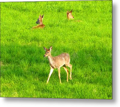 Peaceful Togetherness Metal Print