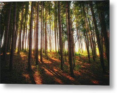 Peaceful Wisconsin Forest 2 - Spring At Retzer Nature Center Metal Print by Jennifer Rondinelli Reilly - Fine Art Photography