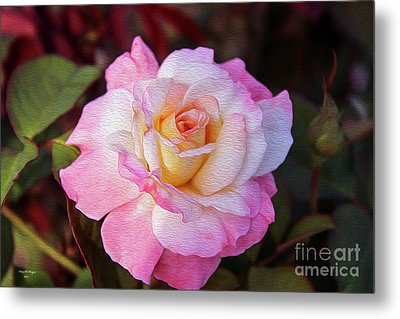 Peach And White Rose Metal Print
