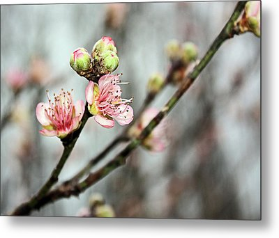 Metal Print featuring the photograph Peach Blossom by Kristin Elmquist